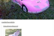 Věci, které chci koupit králík