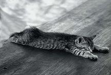 cat / あるある