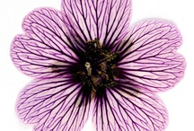 | Drawing inspiration - Botanical/insects ... |