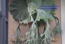 neobične biljke