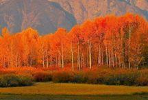 Ősz / Herbst