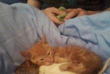 Koty moja miłość/Cats my love