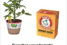 tips plantas