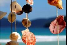 strandskaller