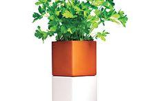 Garden / Herbs