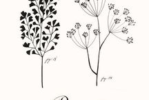 Plants & Floral Illustrations