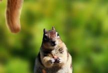 Squirrel / by Melanie Burbage