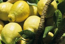 Citrus fruits, from Sicily, and their hidden values