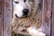 dossier chien
