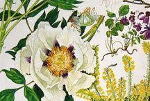 Botanic Health