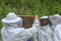 Bienen / Bienen im Golfaprk München Aschheim