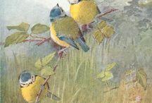 Bird blue tits