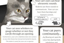 Great info about cats!