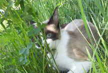 Cats, Cats, Cats! :) / Cats