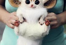 neskutečně roztomilá zvířátka
