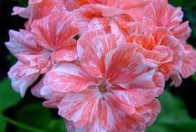 letni kvetiny