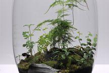 piante in vetro
