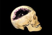 decorative skulls-misc. materials / by Jacqueline Sloan