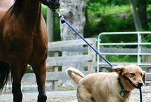 Hund und Pferd / Wer sagt das mann, wenn man ein Pferd hat kein Hund haben kann? Die Frage ist nur: Wie verlieben sich die zwei...