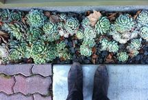Gardening in the desert / Dessert gardening is a challenge. All these pins are ideas I like to conserve water and still feel green around me.