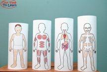 Science- anatomy