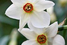 Kwiaty, kwiatki, kwiatuszki