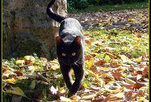 Koty jesienią