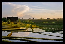 Landscape / Photos of Bali and other Islands of the Indonesian Archipelago.