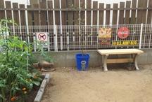 庭作り / 庭作り 着々と進行中