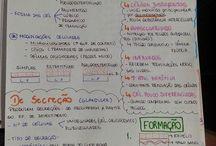 Estudo Facul
