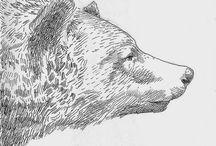 Animals Draw