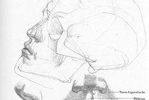 Kresba hlavy a jejich částí