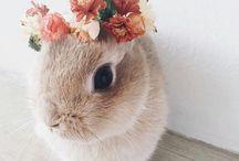 ~Bunnies♡♡♡