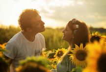 Sunflower shooting