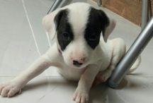 Athena / dog