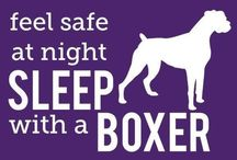 For the love of my boxer...!