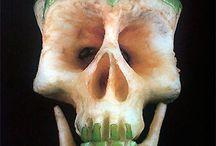 skulls / by Robert Savant
