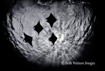Explore the Underwater World / Underwater photography from Beth Watson Images.