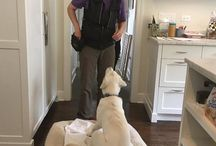Dog Training