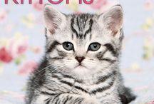 2015 Kittens Calendar / by MegaCalendars.com