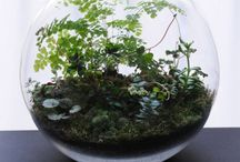 Terrariums and Mini Gardens