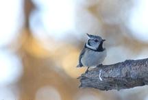 Animals in the wood / Gli #animali dei nostri boschi e delle nostre #Alpi!!! #dolomiti #animals #wood