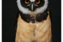 Owl you needs is love / by Tausha Petrie