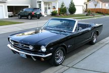 The Mustang Love