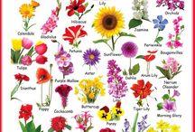 flower dicionary