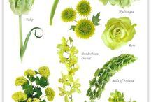 catalog of flowers