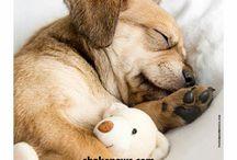Animals & Puppies