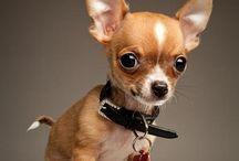 so darn cute!!