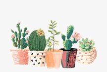 Hello Mr. Cactus!