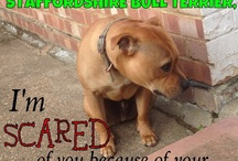 Dog's Life  / Bull Breeds - love them.